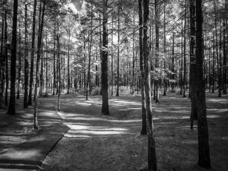 An infrared image of Songyuan Virgin Forest Park captured with B+W 090 filter.